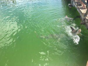 Shark Feeding Camper Trailer Hire Destinations