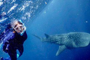 Whaleshark Swim